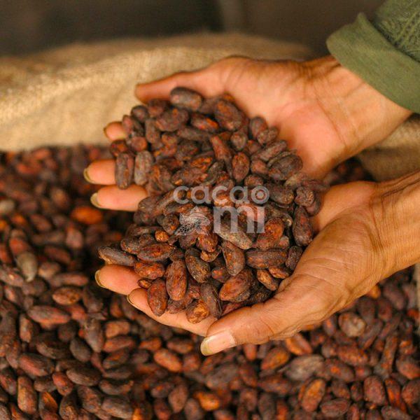 cacaomi-hat-cacao-2